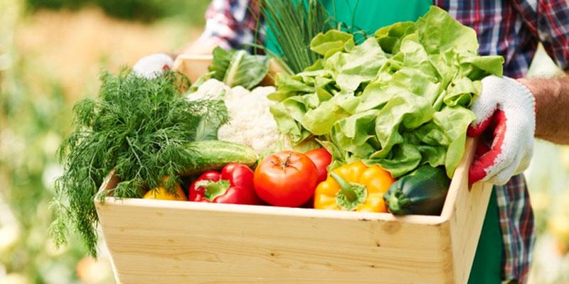 Alimentación y Salud (3)